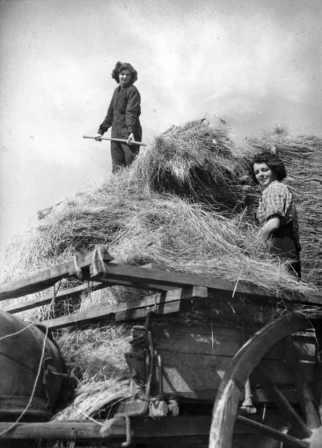 WOMEN'S LAND ARMY AT WORK